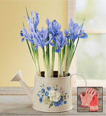 Iris Meadow Blooms Watering Can  Free Gloves
